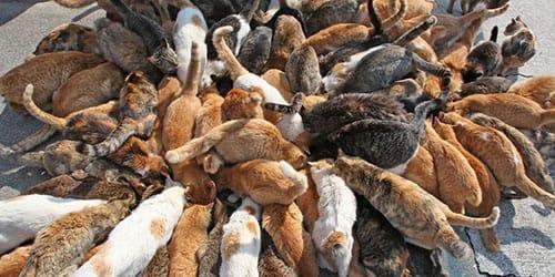 много кошек облезлых