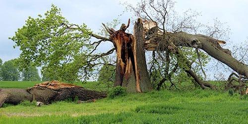 падают деревья во сне