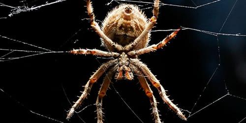 паук и паутина во сне