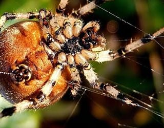 Пауки и паутина