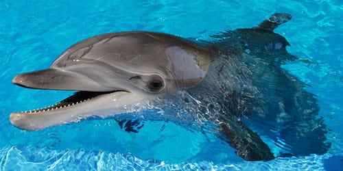 плавать с дельфинами в бассейне