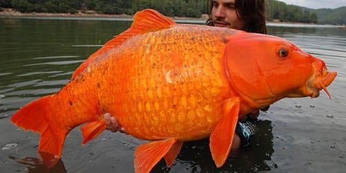 большая рыба и мужчина