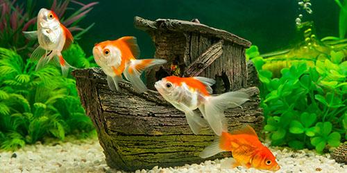 к чему снится мужчине рыба в аквариуме
