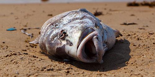 дохлая рыбина