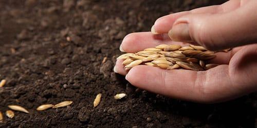к чему снится сажать семена