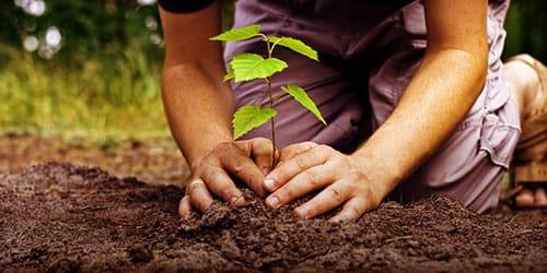 к чему снится сажать дерево в землю
