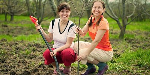 сажать молодое дерево