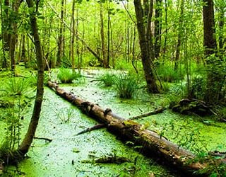 К чему снится тонуть в болоте?