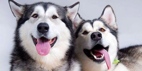к чему снятся две добрые собаки