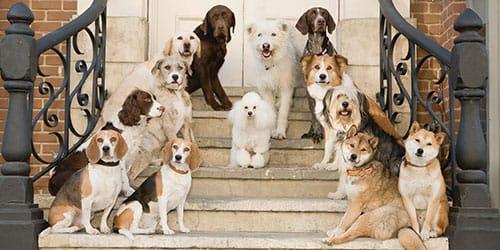стая добрых собак