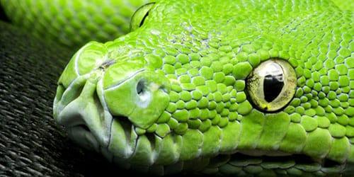 голова змеи во сне