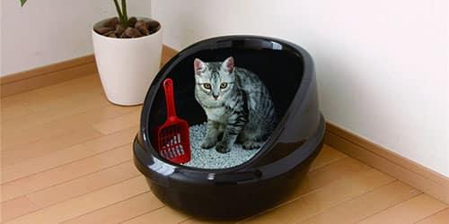 Кошачьи экскременты