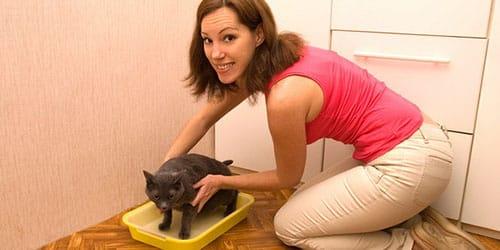 убирать кошачьи экскременты