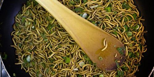 личинки в еде
