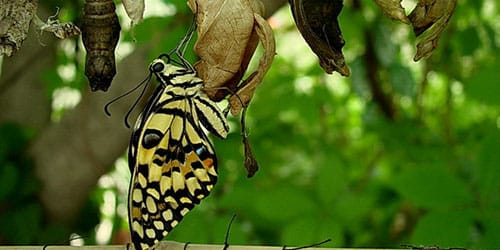 личинка гусеницы