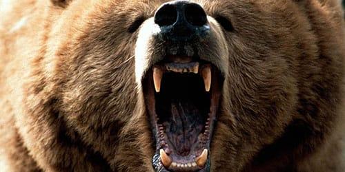 медведь людоед