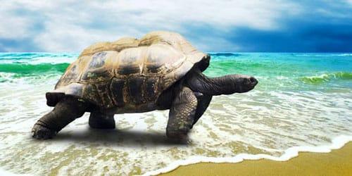 к чему снится морская черепаха