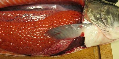 свежая рыба с икрой