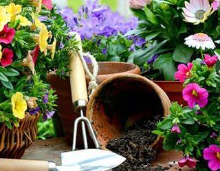 Сажать цветы