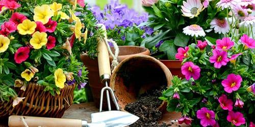 сажать цветы во сне