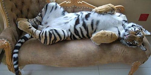 добрая тигрица