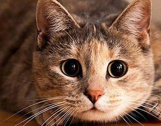 Убить кошку, кота или котенка