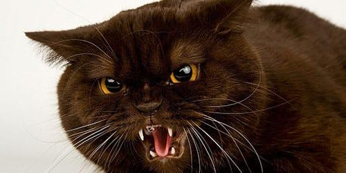 убить черную кошку