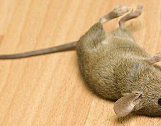 Убить мышь