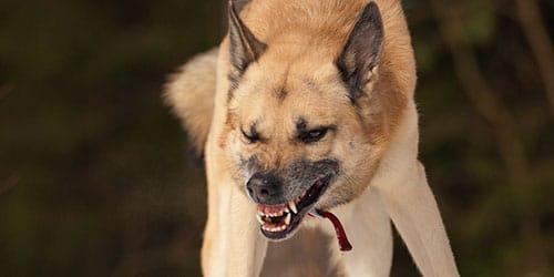 убить бешеную собаку
