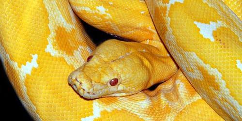 большая змея в доме