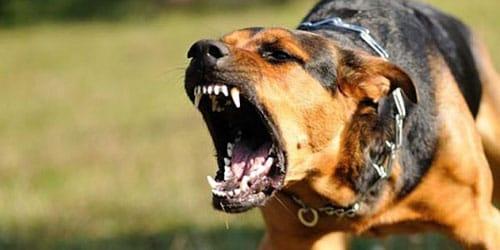 к чему снится бешеная собака