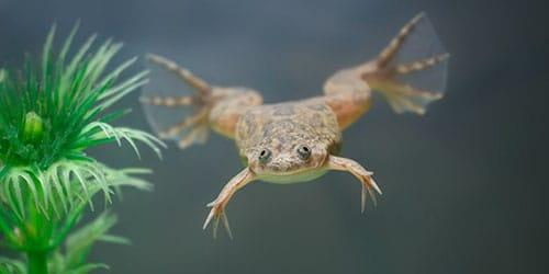 к чему снится лягушка в воде