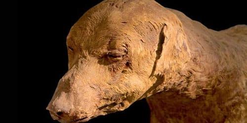 мумия животного