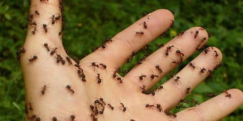 муравьи ползают по телу