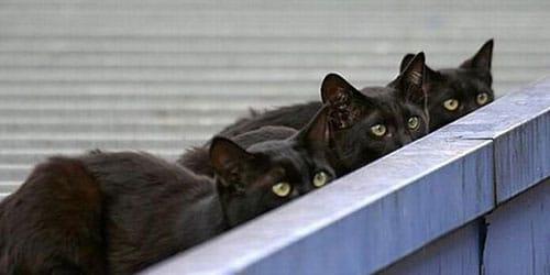 кошки следят