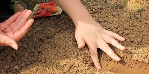 сажать семена в землю