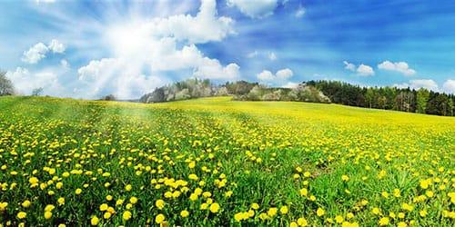 к чему снится летний солнечный день