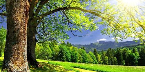 прекрасный солнечный денек