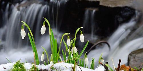 к чему снится весна