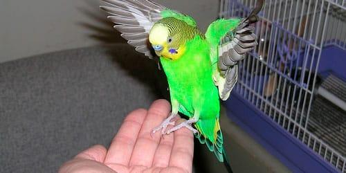 держать попугая во сне