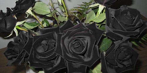 букет черных роз