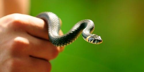есть змею во сне