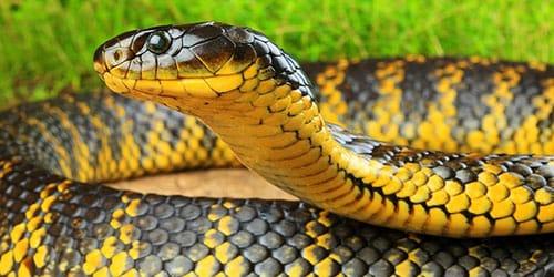 убить и съесть змею