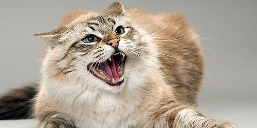 Злая кошка нападает во сне