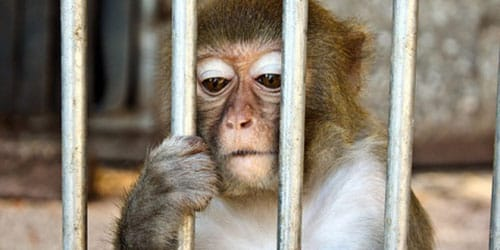 обезьянка в клетке