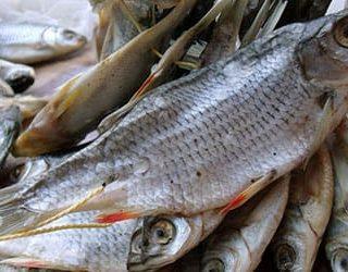 Сухая рыба