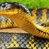 видеть ядовитую змею во сне