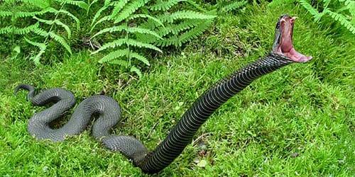убить ядовитую змею