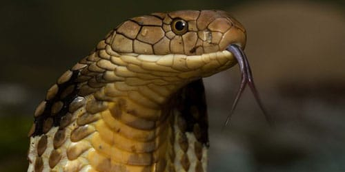 ползущая змея