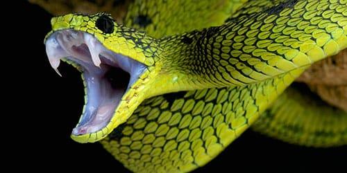 укусила зеленая змея